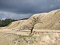 Dead tree in Cwm Diliw - geograph.org.uk - 1103609.jpg