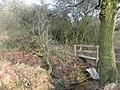 Debris in Petty's Brook - geograph.org.uk - 1240776.jpg