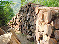 Deforestration premejung.JPG