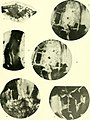 Denkschriften - Österreichische Akademie der Wissenschaften (1917) (20670513470).jpg