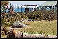 Destruction of Woody Point-09-Large (2924126778).jpg