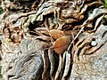 Dettaglio di foglie e tronco.jpg