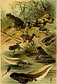 Deutschlands Amphibien und Reptilien (1890) (20265887244).jpg