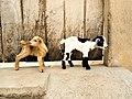 Deux agneaux.jpg
