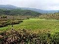 Devikulam Views - panoramio.jpg