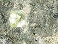 Diamante en bruto en museo de historia natural en NY - panoramio.jpg