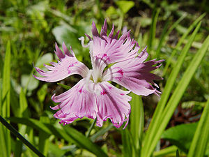 Pink wikipedia the color pink takes its name from the flowers called pinks members of the genus dianthus mightylinksfo