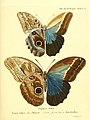 Die ausländischen Schmetterlinge in Abbildungen nach der Natur (Tab. XLIV) (6012546032).jpg