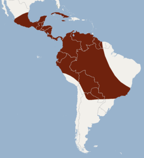 Distribution of Eumops glaucinus.png