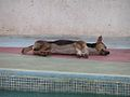 Dog (3328368797).jpg