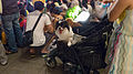 Dogs on Baby Carts with Masters in Performance 20140712.jpg