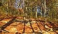 Doline in Steilstufe des Muschelkalks zwischen Bad Berka und Saalborn 01.jpg