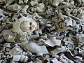Doll among Gas Masks - Abandoned Schoolhouse - Pripyat Ghost Town - Chernobyl Exclusion Zone - Northern Ukraine (27005500902).jpg