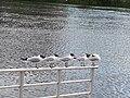 Donau bird.jpg