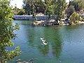 Duck Pond. - panoramio.jpg