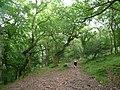 Dunkery Hill , Footpath - geograph.org.uk - 1212181.jpg