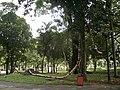 ESCULTURAS NO PARQUE DA LUZ (14) - panoramio.jpg