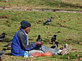 Eating with Ravens-1 (5319740538).jpg