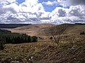 Edge of Tywi Fechan forest - geograph.org.uk - 739540.jpg