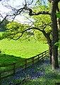 Edge of the woods near Beech Hill - geograph.org.uk - 1294286.jpg