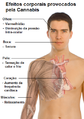Efeitos corporais provocados pelo Cannabis.png