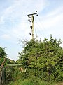 Electricity pole by footpath - geograph.org.uk - 1373073.jpg