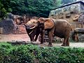 Elephant colonoscopy.jpg