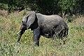 Elephants, Tarangire National Park (6) (28703483045).jpg