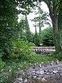 Entrance alley of Monivea arboretum - panoramio.jpg