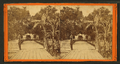 Entrance to Col. Hart's Grove opposite Palatka, Florida, from Robert N. Dennis collection of stereoscopic views.png