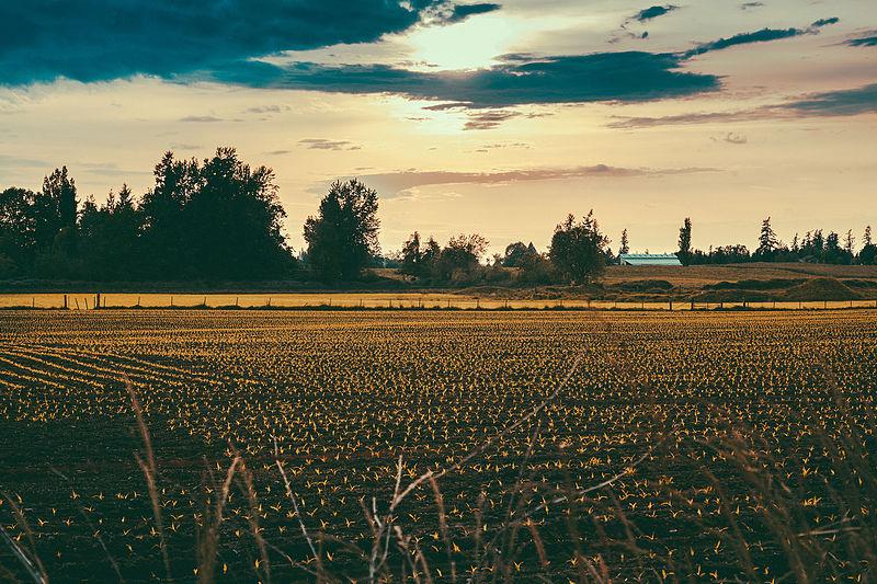 File:Enumclaw Farm Washington State (18077211396).jpg
