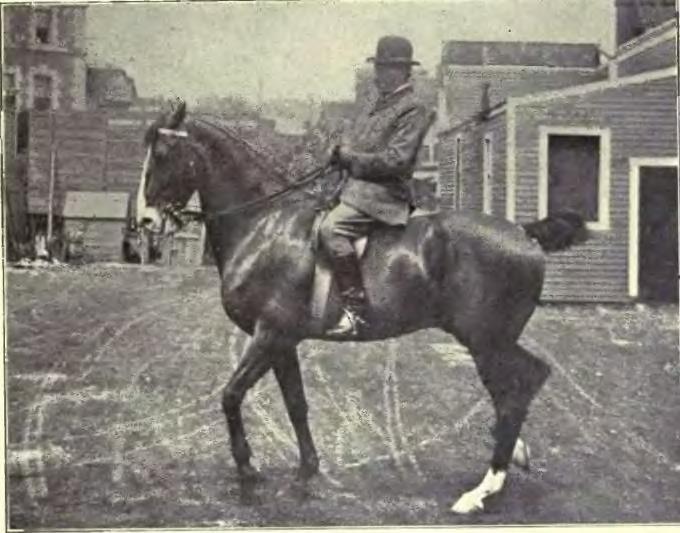 File:Equitation images.djvu