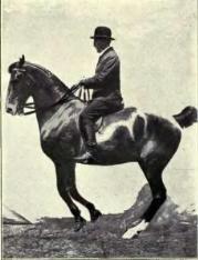 Equitation images.djvu