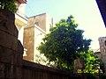 Eriobotrya japonica, Virgin Mary Cathedral, Aleppo.jpg