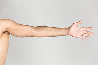 Arm forearm and upper arm together