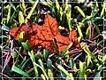 Fallen Leaf - Flickr - pinemikey.jpg