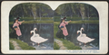 Feeding the swan in the park, from Robert N. Dennis collection of stereoscopic views.png