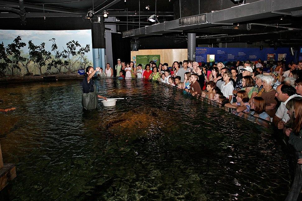 Feeding time melb aquarium