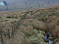 Fence, Whitley Common - geograph.org.uk - 298054.jpg