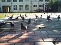 Feral pigeons, Taiwan - panoramio (1846).jpg