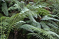 Ferns on national botanical gardens rainforest tour.jpg