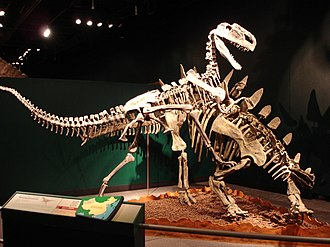 Stegosauria - A fossil melee involving a stegosaurian (Tuojiangosaurus) and a mid-sized theropod (Monolophosaurus), Field Museum in Chicago
