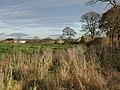 Field at Burnhouse Farm - geograph.org.uk - 1049879.jpg
