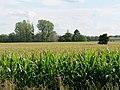 Field near Kieritzsch 2019-08-10 01.jpg
