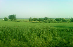Fields between Pithapuram and Gollaprolu