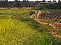 Fields of Gan Shlomo, Shfelah , Israel שדות קבוצת שילר, שפלת יהודה - panoramio.jpg