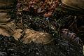 Flickr - DVIDSHUB - Operation Forest Light.jpg