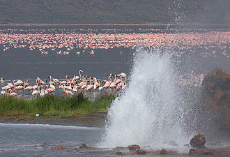 Anatoxin-a - Flamingos at Lake Bogoria
