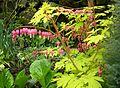 Flickr - brewbooks - Our Garden (31).jpg