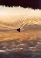 Flickr - bslmmrs - Early bird.jpg